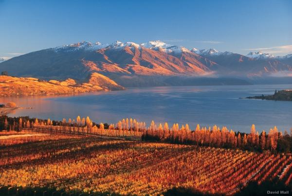 New Zealand - Rippon Vineyard, Lake Wanaka -
