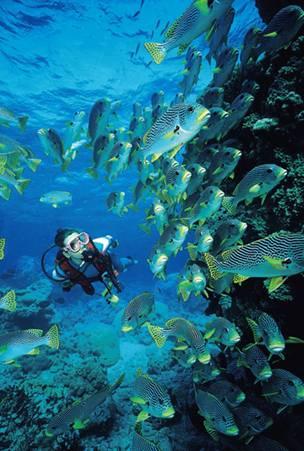Mergulho na Grande Barreira de Corais em Cairns, Austrália