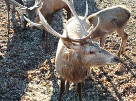 No mês de outubro, cinco machos serão soltos em uma área maior para acompanhamento de sua adaptação