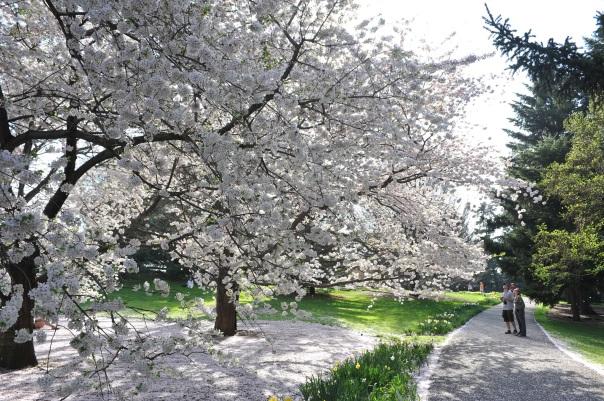 The New York Botanical Garden, uma das principais atrações da região